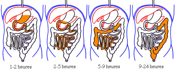Physiologie de la digestion - afblum.be