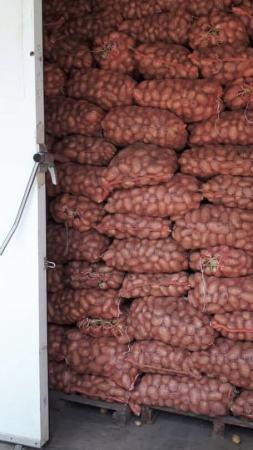 pomme de terre FPFD stockage covid-19