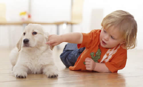 Nino-perro