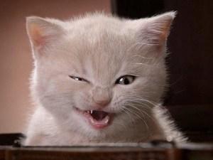 gato-riendose1