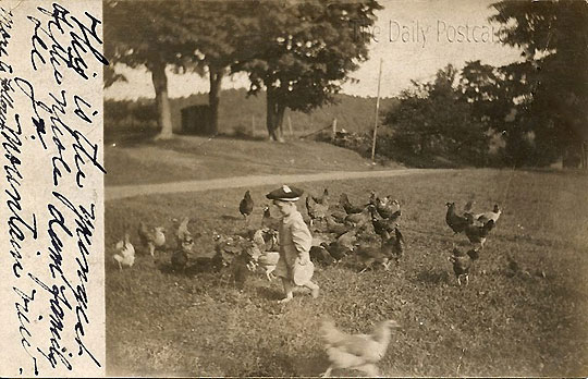 Running with Chickens