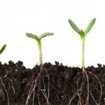 Affiliate Marketing Is Like Growing a Plant