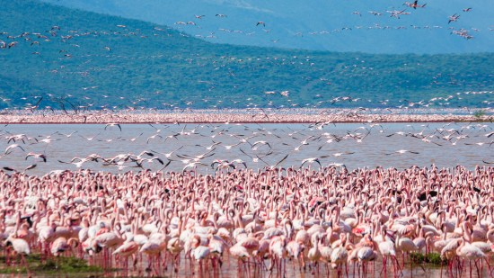 Nakuru National Park