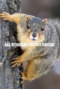 wildlife control Markham