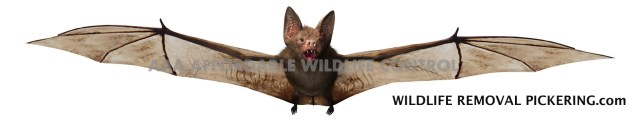 AAA Affordable Wildlife Control Reviews Bat Removal Toronto Reviews