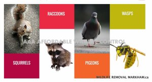 Some Of The Services Provided By Affordable Wildlife Control Include: Wasp Nest Removal Squirrel Removal Bird Nest Removal Raccoon Removal Skunk Removal Bat Removal Prevention Screening Services