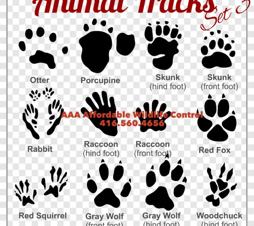 WILDLIFE TRACKS - AAA Affordable Wildlife Control