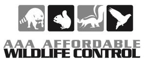 groundhog removal - wildlife control Toronto