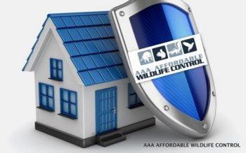 AAA Affordable Wildlife Control - Animal Removal Toronto