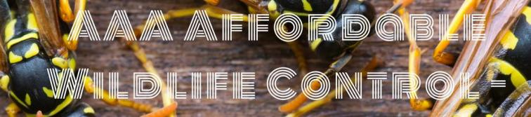 Wasp Nest Removal - Affordable Wasp & Hornet Nest Removal in Toronto & Greater Toronto Area