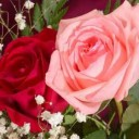 زراعة الورد البلدى