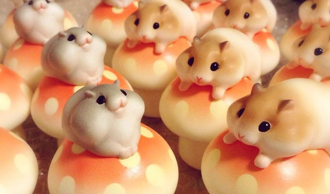 Hamuco hamsters – adorable miniature hamsters