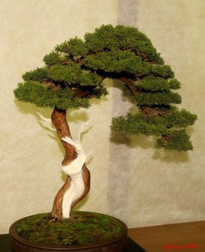 DSC_6843 bonsai - afnews