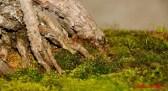 DSC_6850 dettaglio bonsai - afnews
