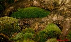 DSC_6853 dettaglio bonsai - afnews