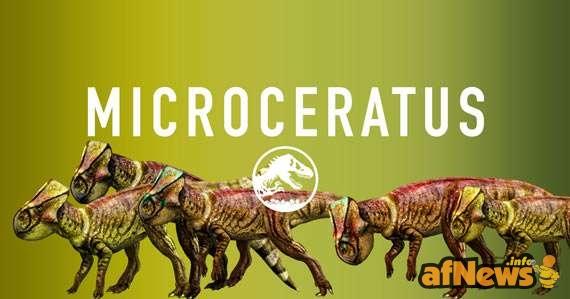 Microcerato