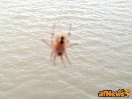 066 Saluti a Spidey (che sorveglia il Tanaro) - afnews