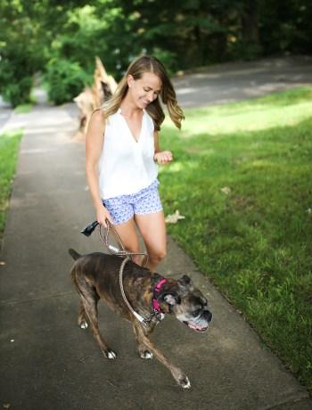 woman walking a boxer dog