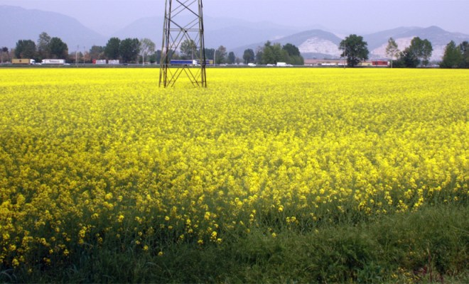 L'eterna primavera della speranza