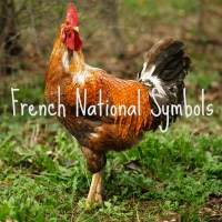 Why is the rooster a symbol of France?