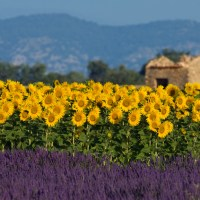 Curious Histories of Provence:  Book Review