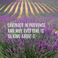 Lavender In Provence and Why Everyone Is Talking About It