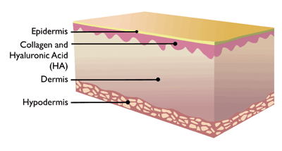 skin tissue layers
