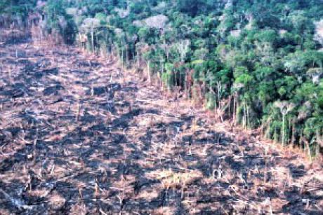 amazon-deforestation