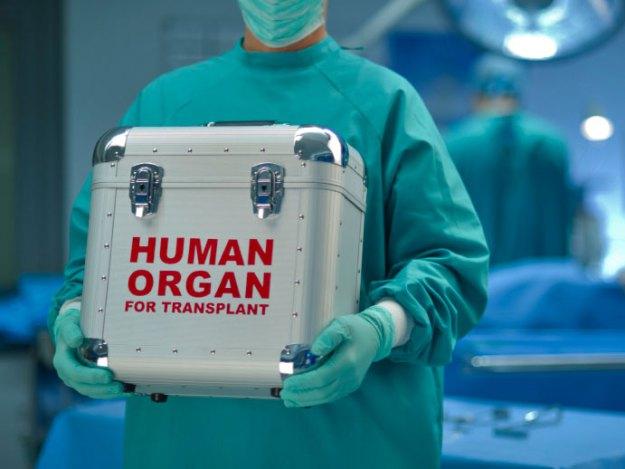 human-organ-for-transplant
