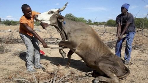Siccità in Zimbabwe