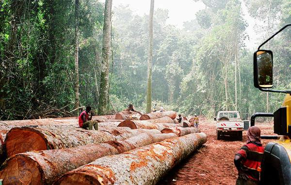 Deforestazione nelle aree dei pigmei (foto © © Kate Eshelby /Survival)