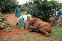 Daphne Sheldrick con Ajok, elefantino orfano nel 1991. ©The David Sheldrick Wildlife Trust