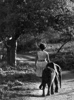 Daphne Sheldrick con l'elefantino Aisha. ©The David Sheldrick Wildlife Trust