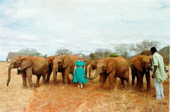 Daphne con i suoi elefantini orfani. ©Copyright The David Sheldrick Wildlife Trust