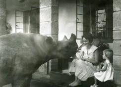 Rufus, rinoceronte trovato da Daphne, con la figlia Angela. ©The David Sheldrick Wildlife Trust