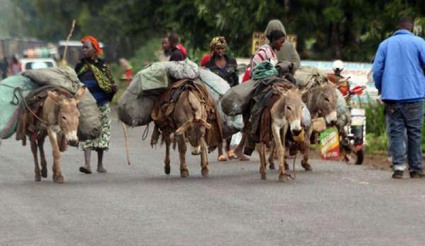 Burundi: asini utilizzati per trasporto persone e masserizie