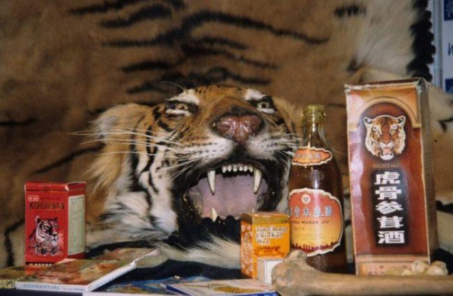 Prodotti di tigre venduti nei mercati del Sudest asiatico