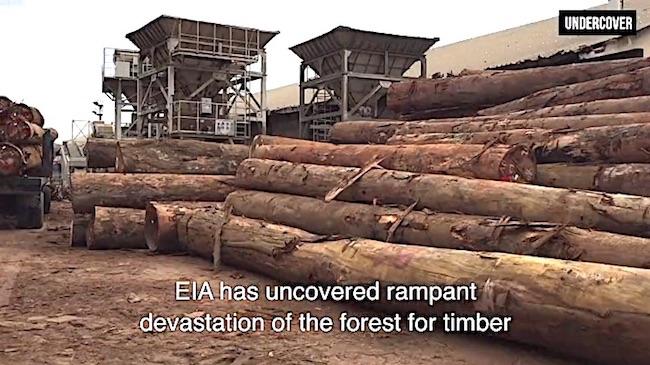Tronchi tagliati nel Bacino del Congo (Courtesy EIA)