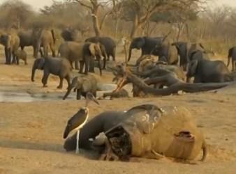 Carcassa di elefante morto a causa della siccità