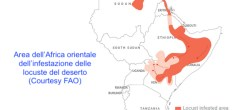 Mappa dell'invasione delle locuste del deserto nel Corno d'Africa (Courtesy FAO)
