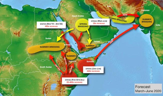 Previsione della crescita delle locuste del deserto per la primavera 2020 (Courtesy FAO)