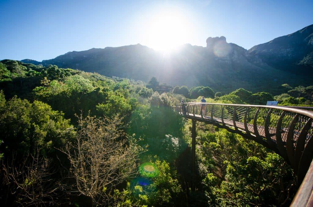 Kirstenbosch Gardens Treetop Walkway