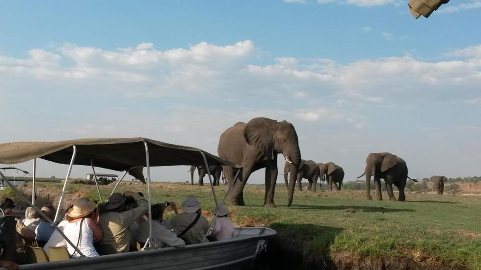 Game viewing by boat on the Chobe River.