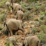 Elephants At Sanbona Reserve