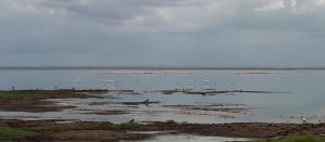 Flooded Wetland Of Amboseli