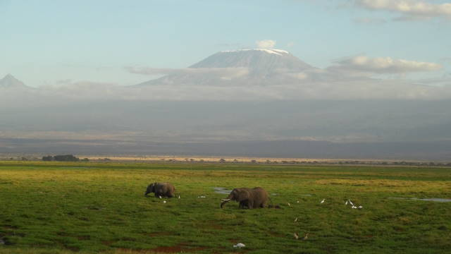 Elephant in the wetlands of Amboseli National Park.