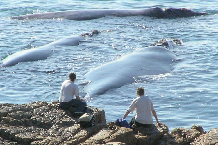 Best Whale Viewing Sites