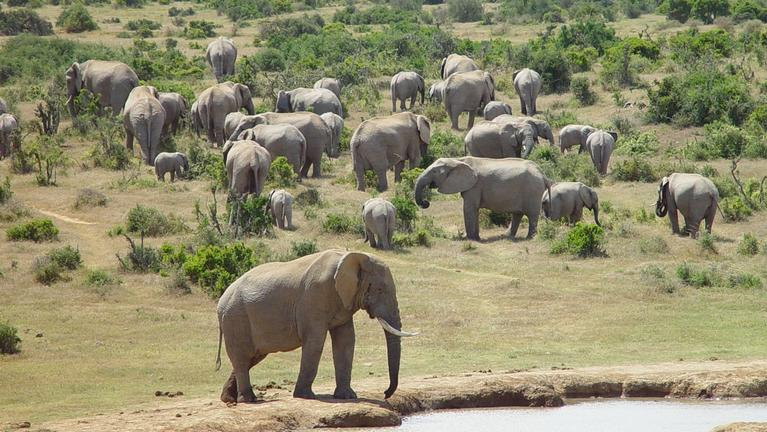 Elephants in the Malaria Free areas of the Eastern Cape