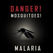 The MOSQUITO The World's DEADLIEST Creature