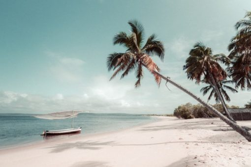 Pristine white sand beach and palm trees of Mozambique